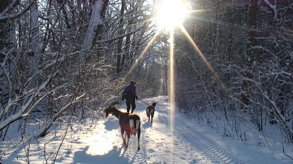 zwei Ziegen in verschneitem Wald